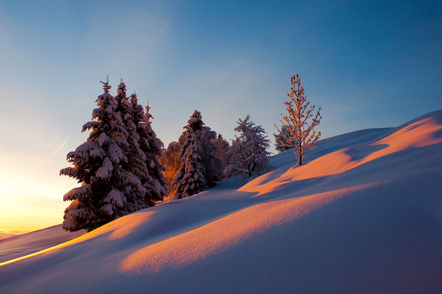 Photograph Smell of snow by Janez Tolar on 500px