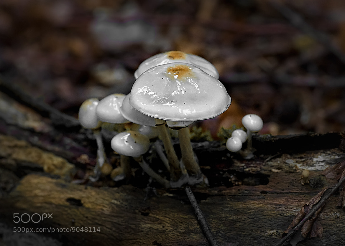 Photograph Fungus by Photomoods Mario Bolz on 500px