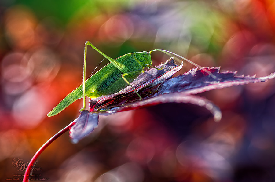 Green on red by Norbert G on 500px.com