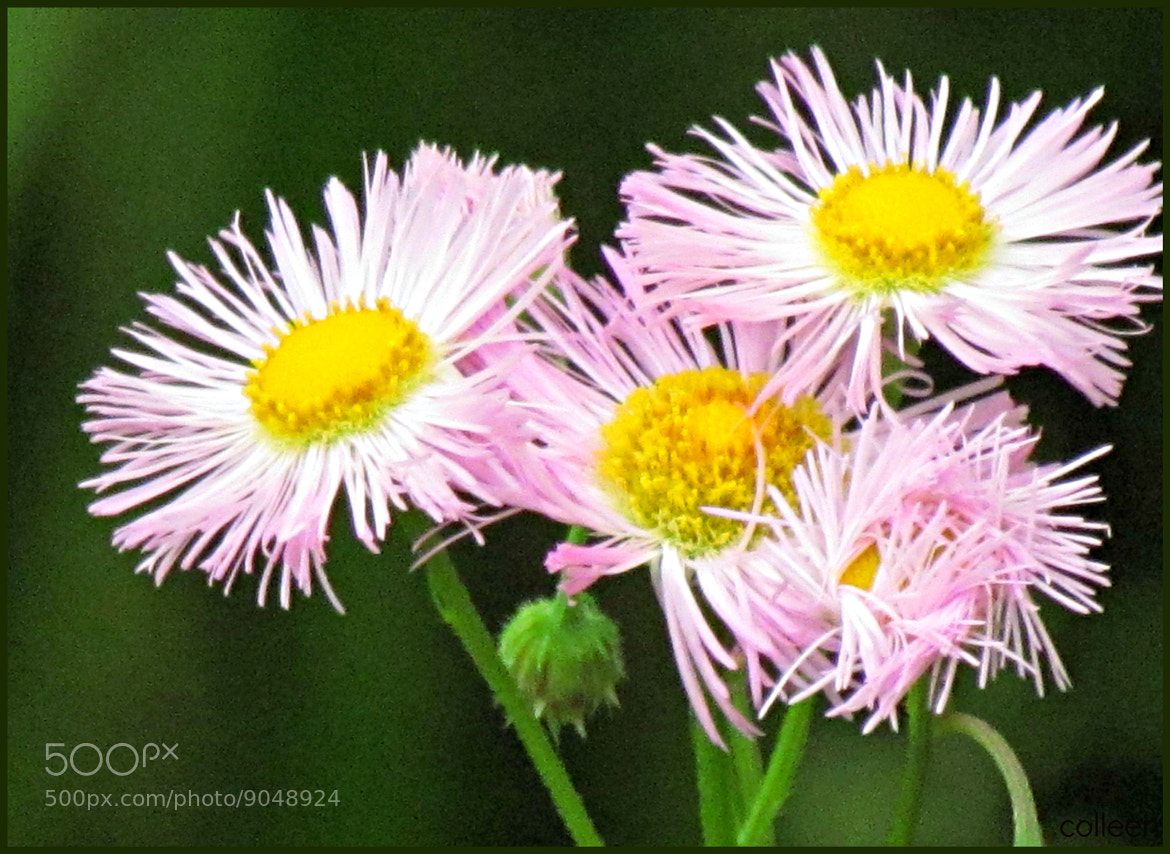 Photograph A Pretty Weed! by colleen thurgood on 500px