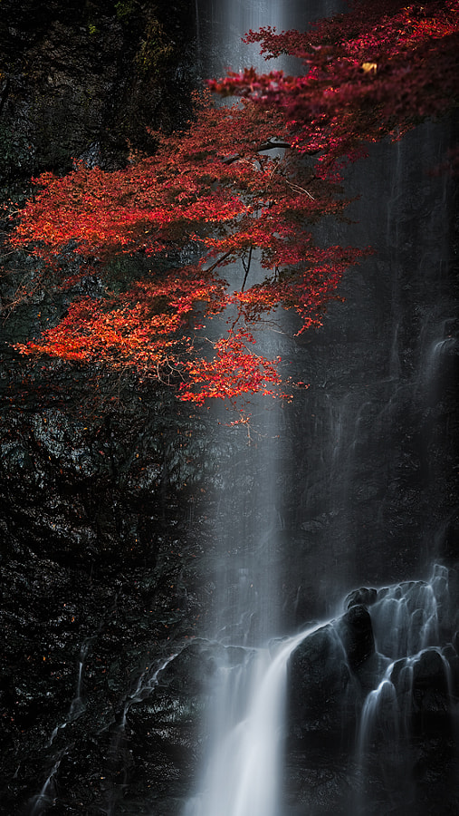 Black and Red by Yoshihiko Wada on 500px.com