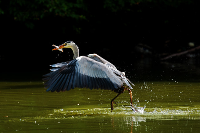 Photograph take off by piet flour on 500px