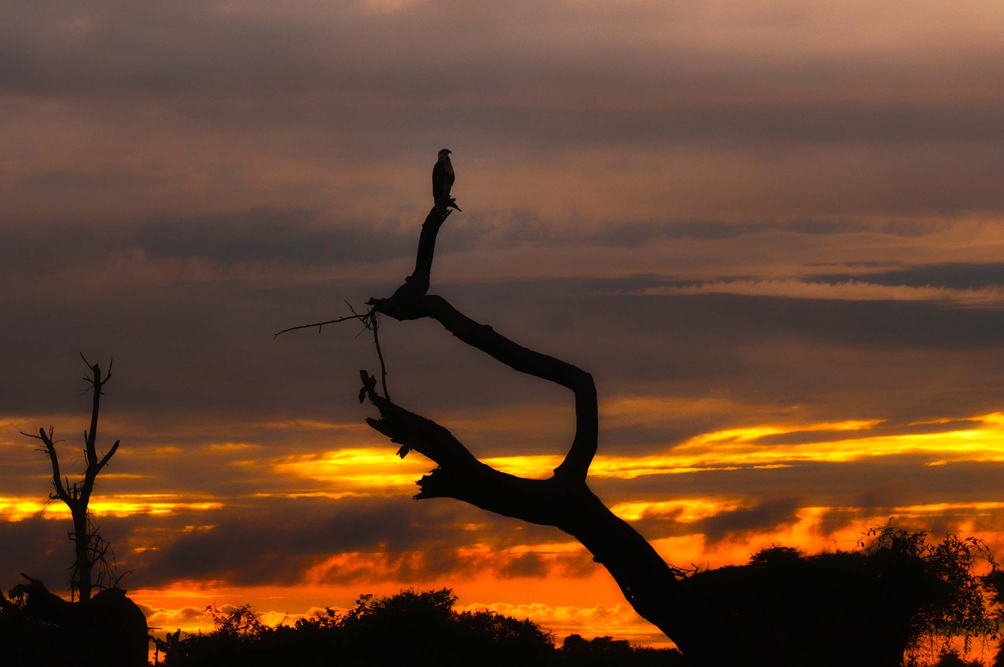 Photograph Eagle at Dusk by Jitendra Sharma on 500px