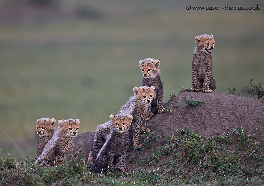 The Mara Six... here comes trouble