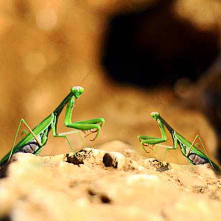 Green alien fighters