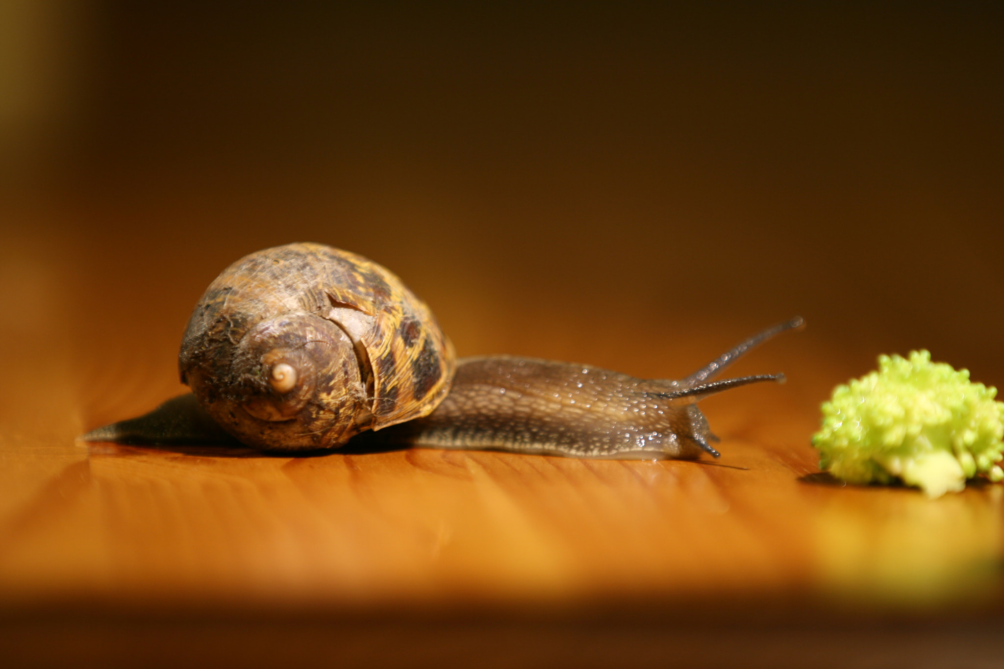 Photograph Snail (Cheerio) HD - The Time Lapse Guys by The Time Lapse Guys on 500px