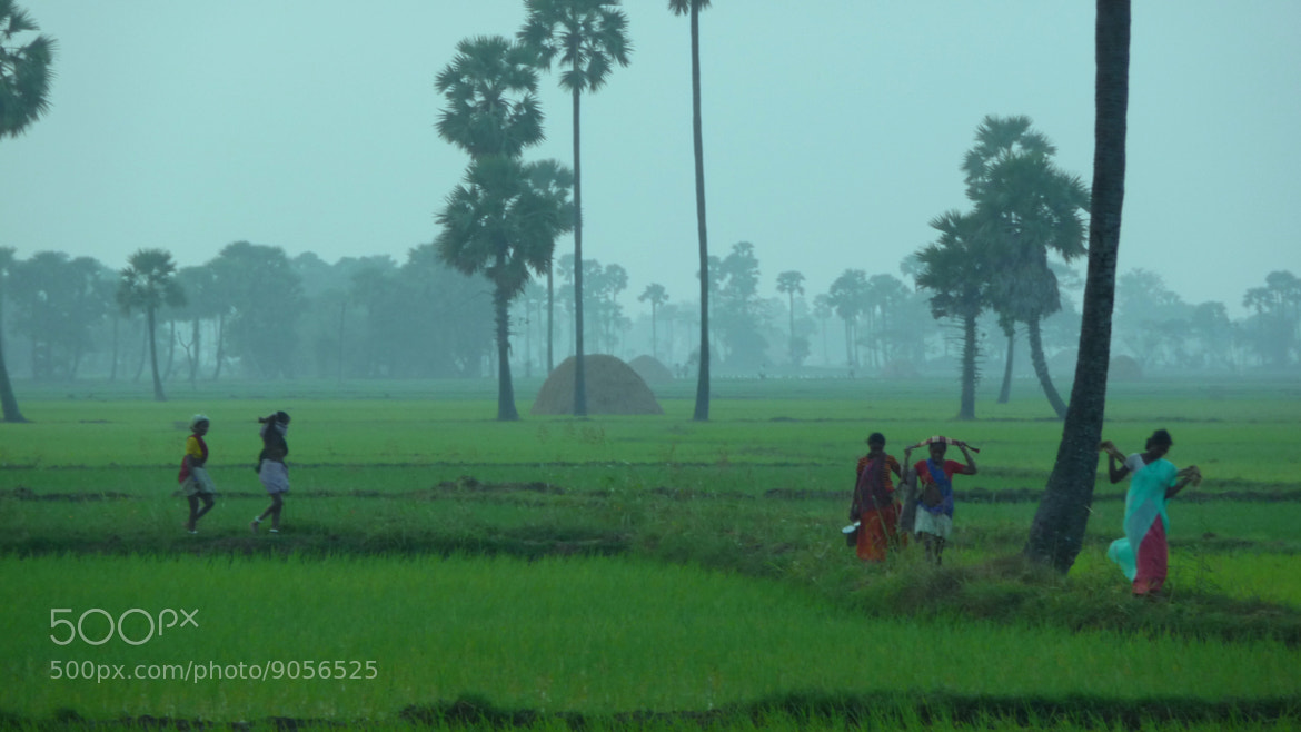 Photograph Untitled by arepallisatyamurthy on 500px