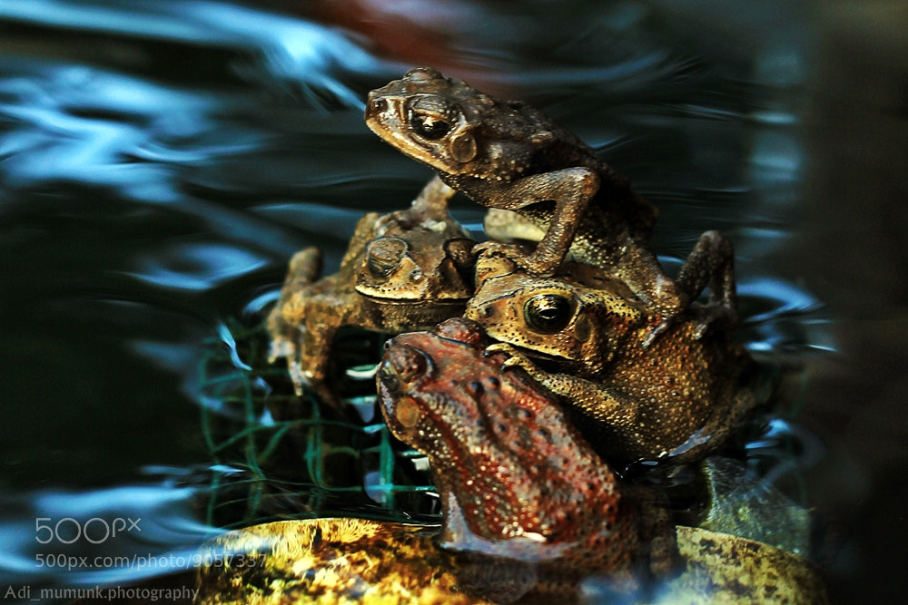 Photograph Togetherness by Adi Mumun'k on 500px