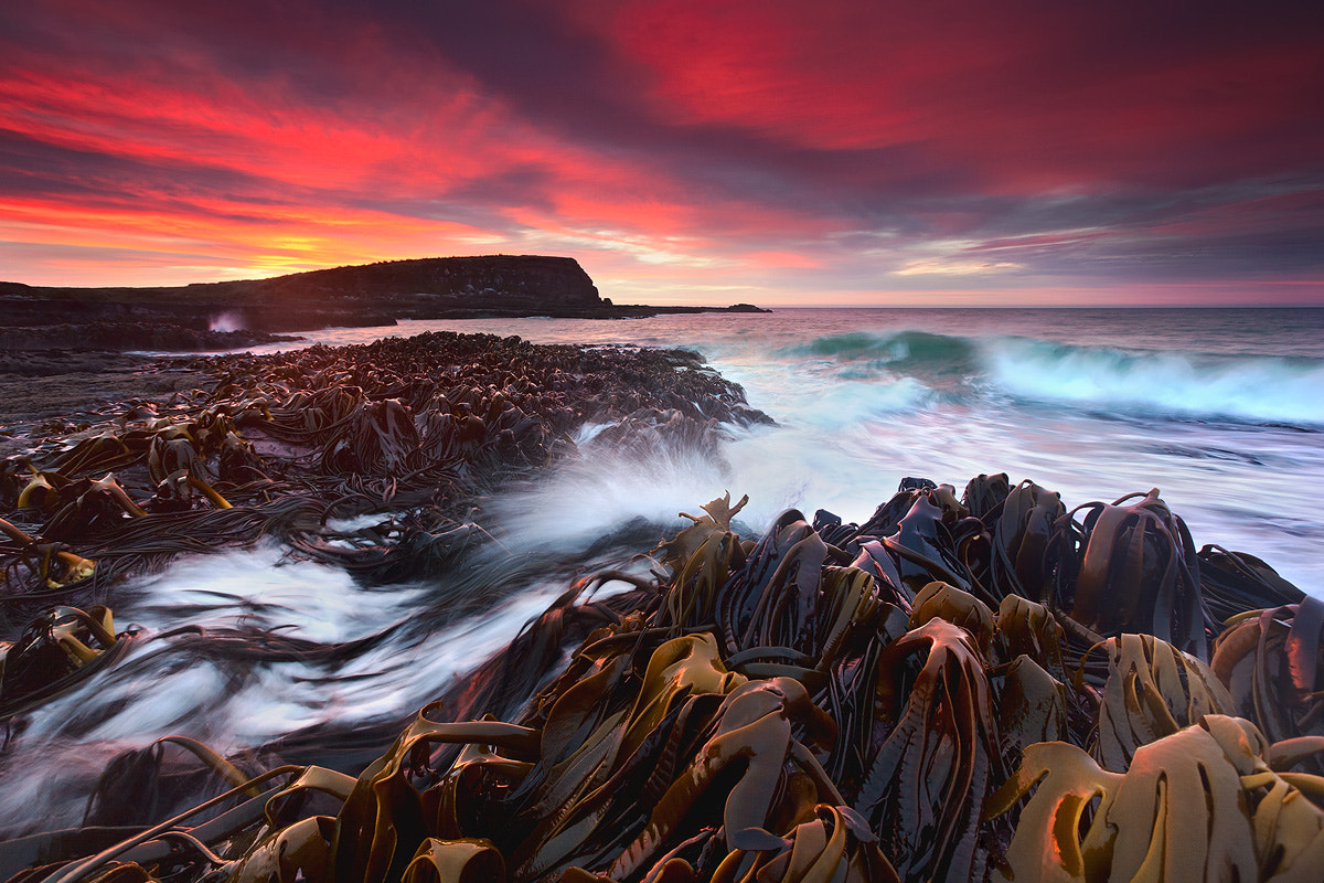 Photograph Symphony of a Thousand by Kah Kit Yoong on 500px