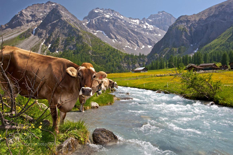 Photograph Summer in Switzerland by Ben Hudson on 500px