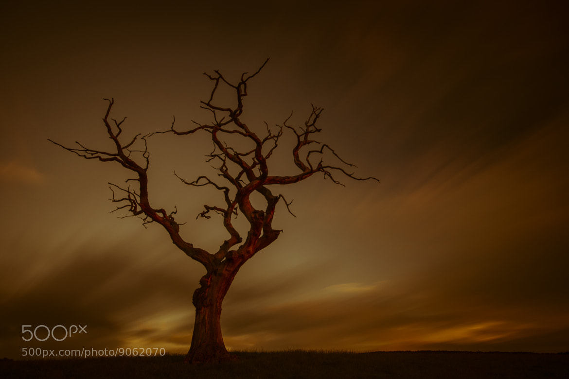 Photograph Morning Tree, Eden Valley by Mark Littlejohn on 500px