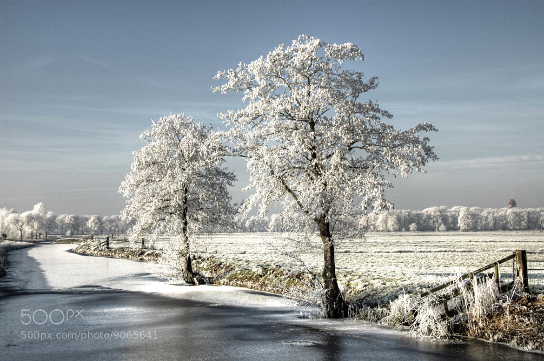 Photograph Frosty Day by Daniel Bosma on 500px