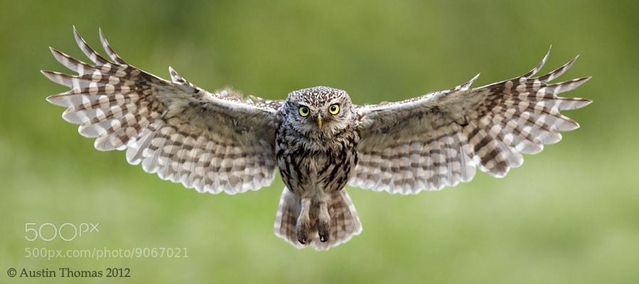Photograph On final approach... by Austin Thomas on 500px