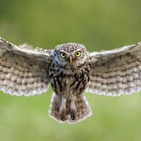 On final approach... by Austin Thomas (Austin_Thomas)) on 500px.com