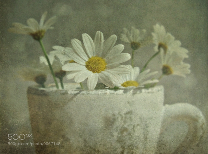 Photograph Summer Étude by Cs. H. on 500px