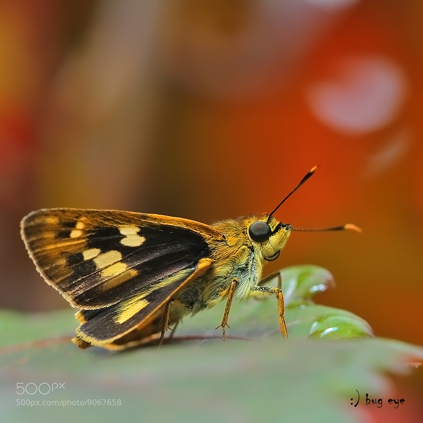Photograph skipper by bug eye :) on 500px