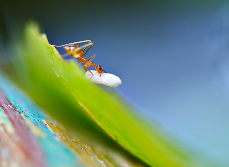 Photograph Fleeing with its cocoon by Sirinat Tanamai on 500px