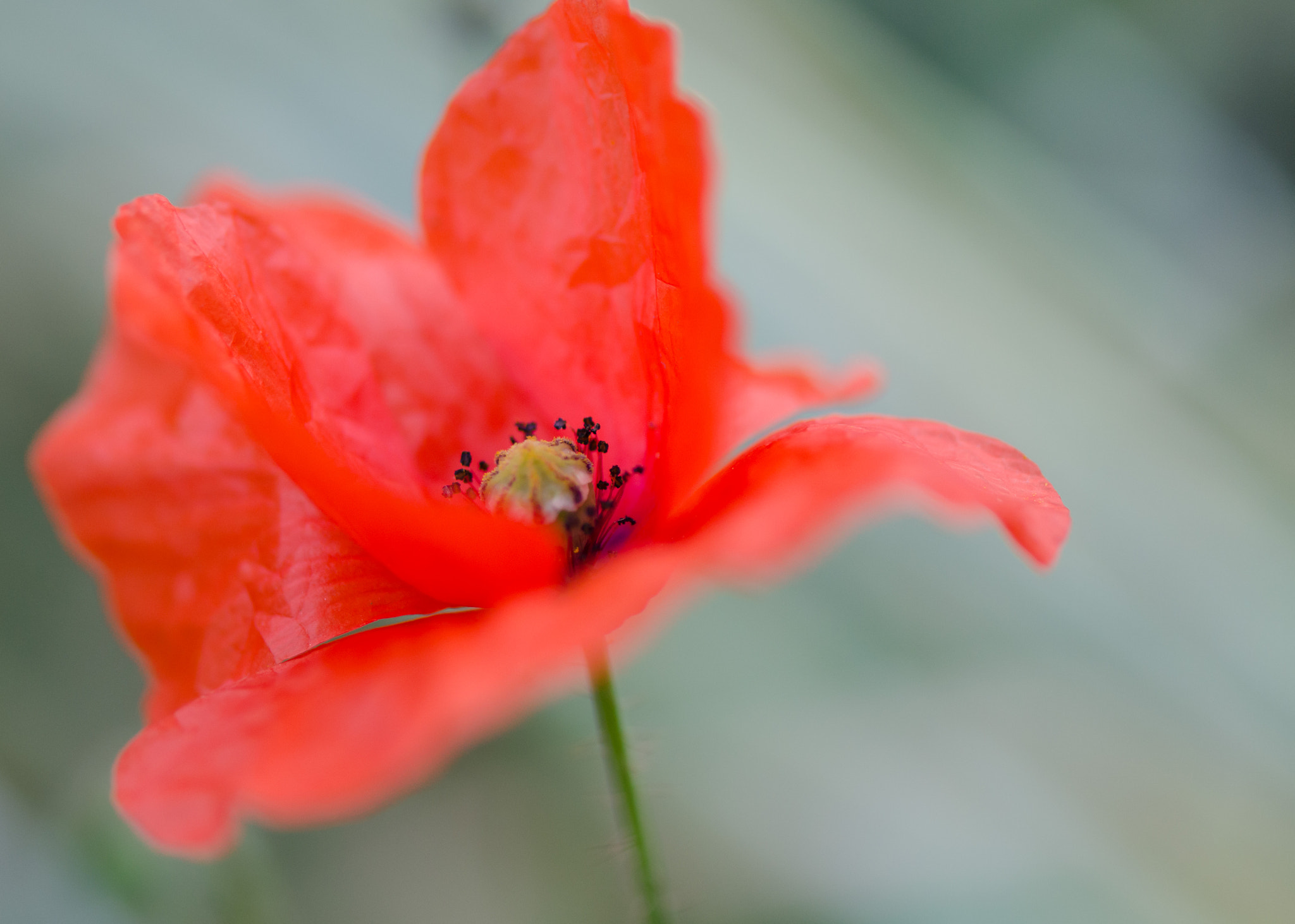 Photograph Mrs. Poppyns by Anne Rosenberger on 500px