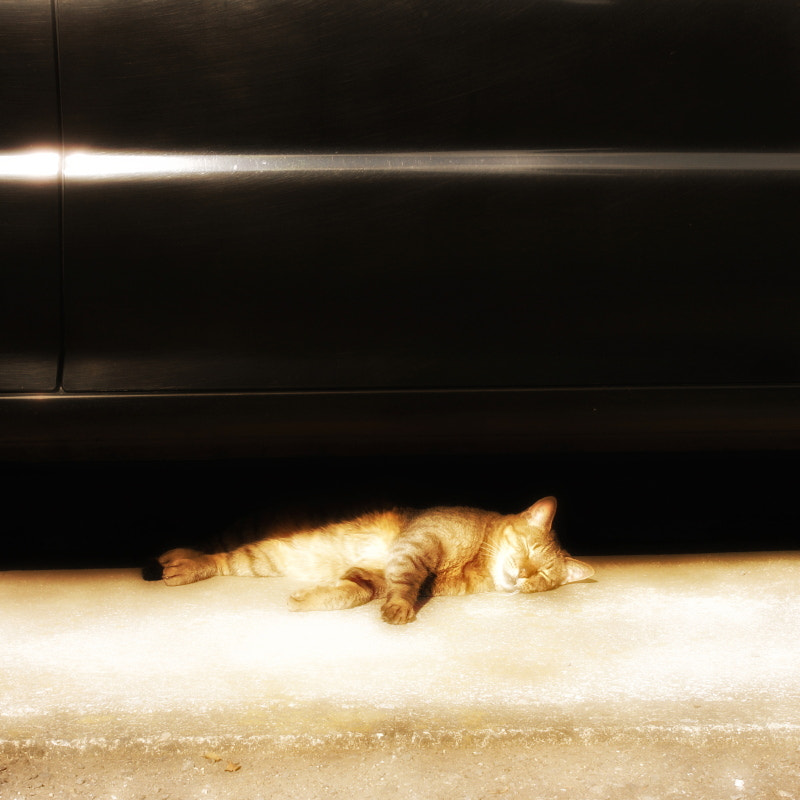 Photograph Sleeping soundly by Masayuki T on 500px