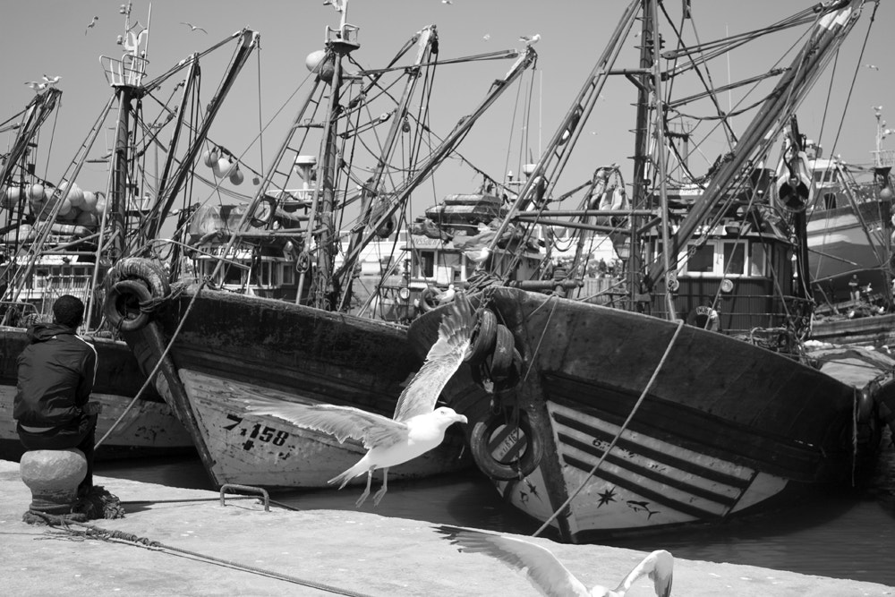Photograph Essaouira fishing boats by Craig Desjardins on 500px