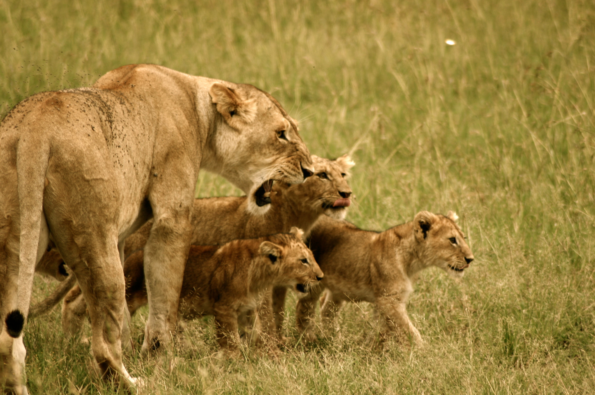 Photograph Pride by Chris Biron on 500px