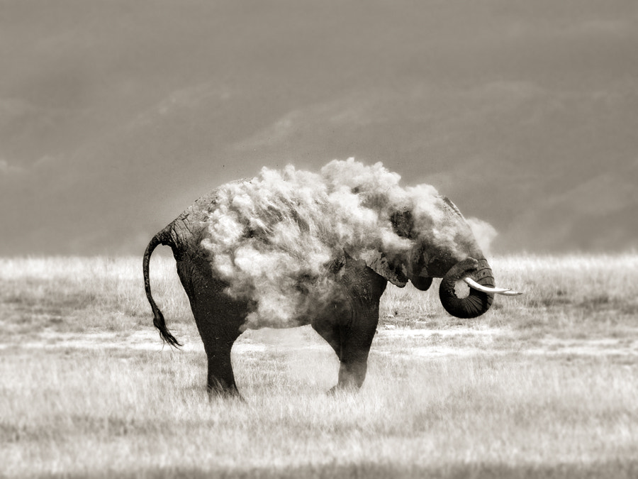 Photograph An elephant in sheep's clothing by Marina Cano on 500px