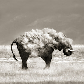 An elephant in sheep's clothing by Marina Cano on 500px.com