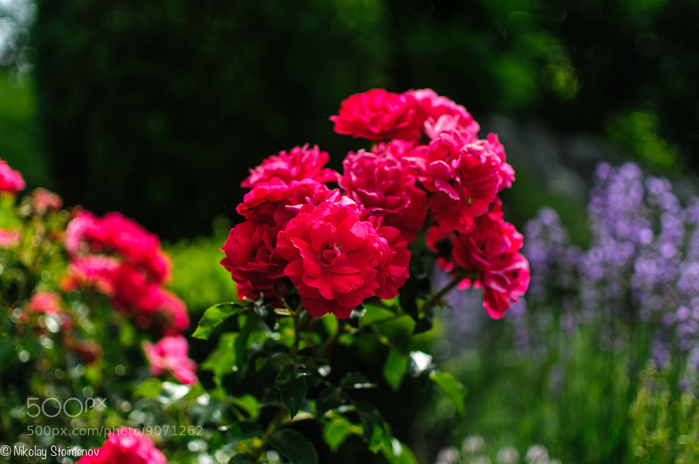 Photograph Flowers by Nikolay Stoimenov on 500px