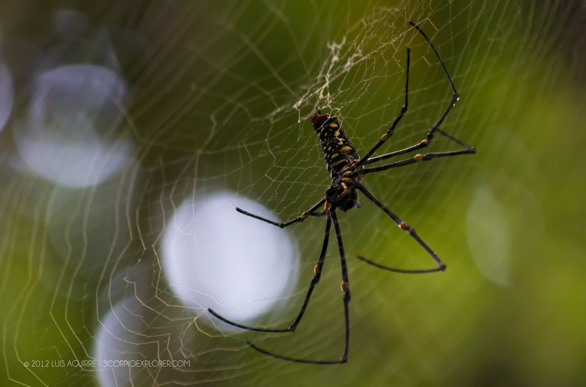 Photograph The Spider by Luis Aguirre on 500px