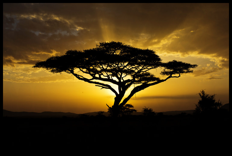 Photograph Africa Sunset by Alina Vorob on 500px