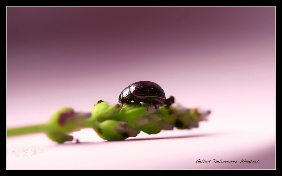 Photograph New Beetle  by Gilles Delamarre on 500px