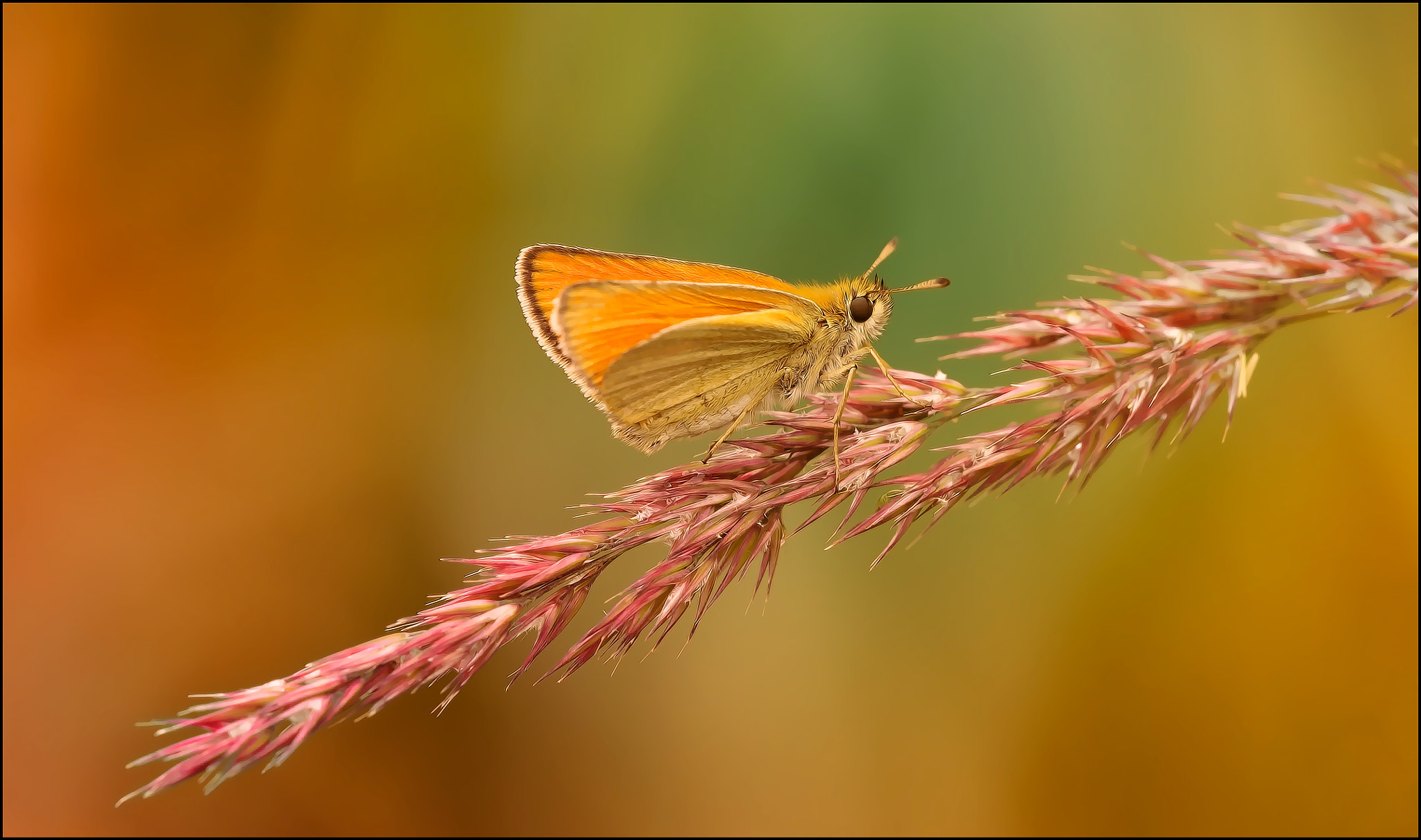 Photograph small butterfly by Sonja Probst on 500px