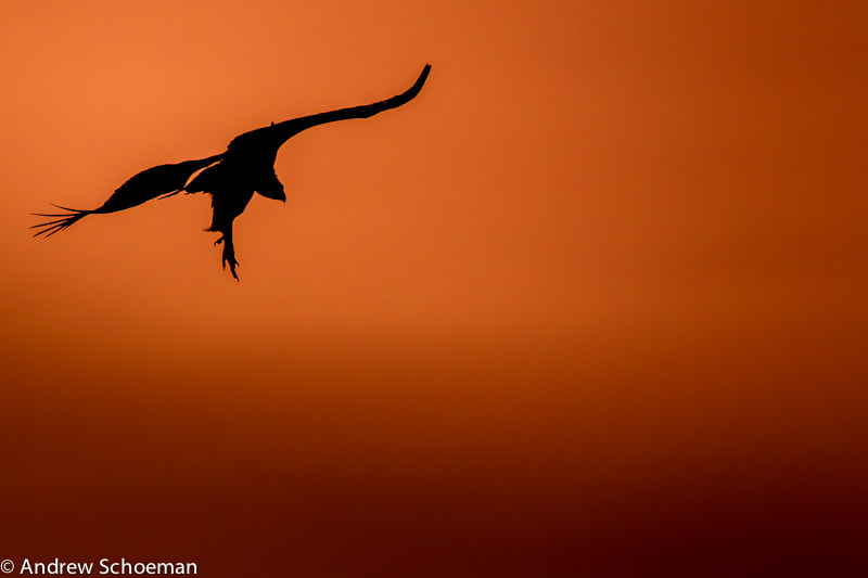 Photograph Landing by Andrew Schoeman on 500px