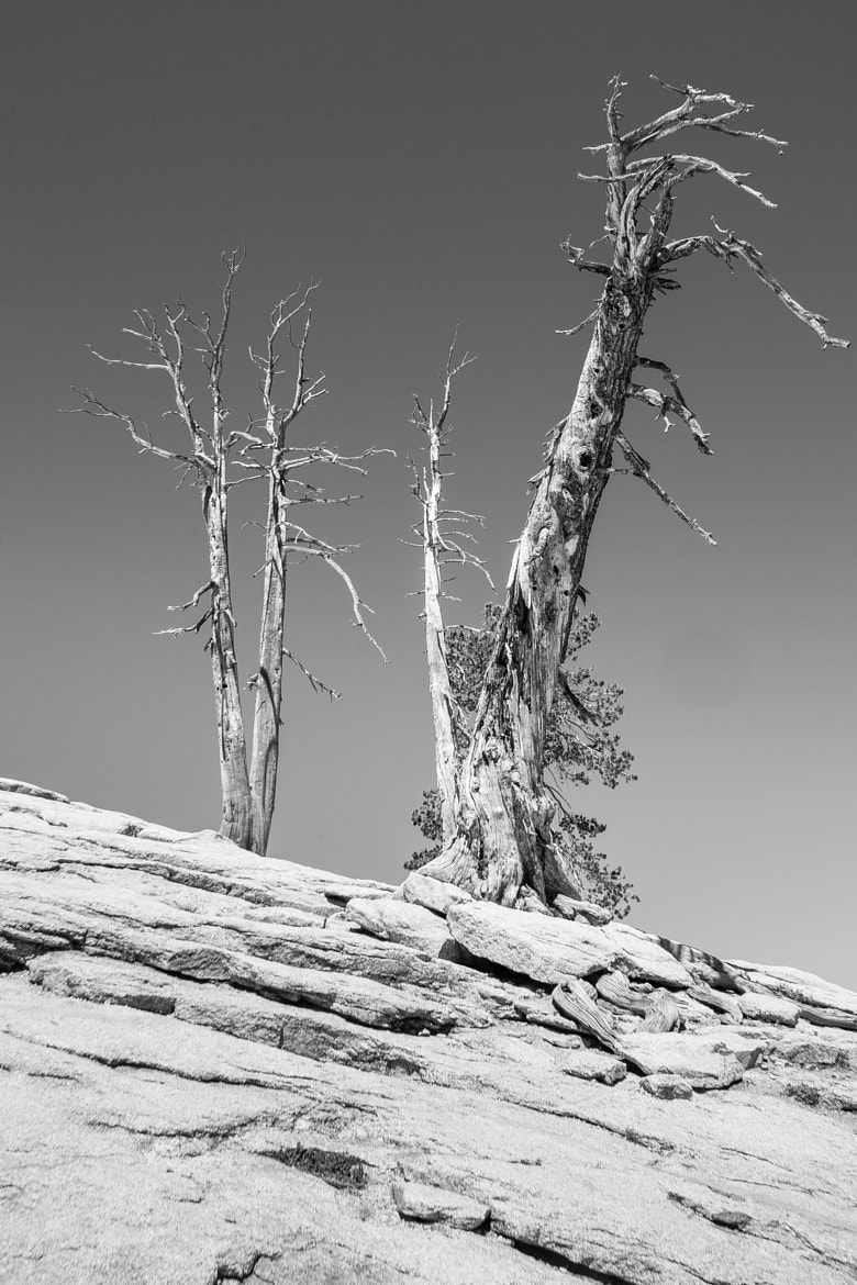 Photograph Lonely Trees by Randy Ashley on 500px