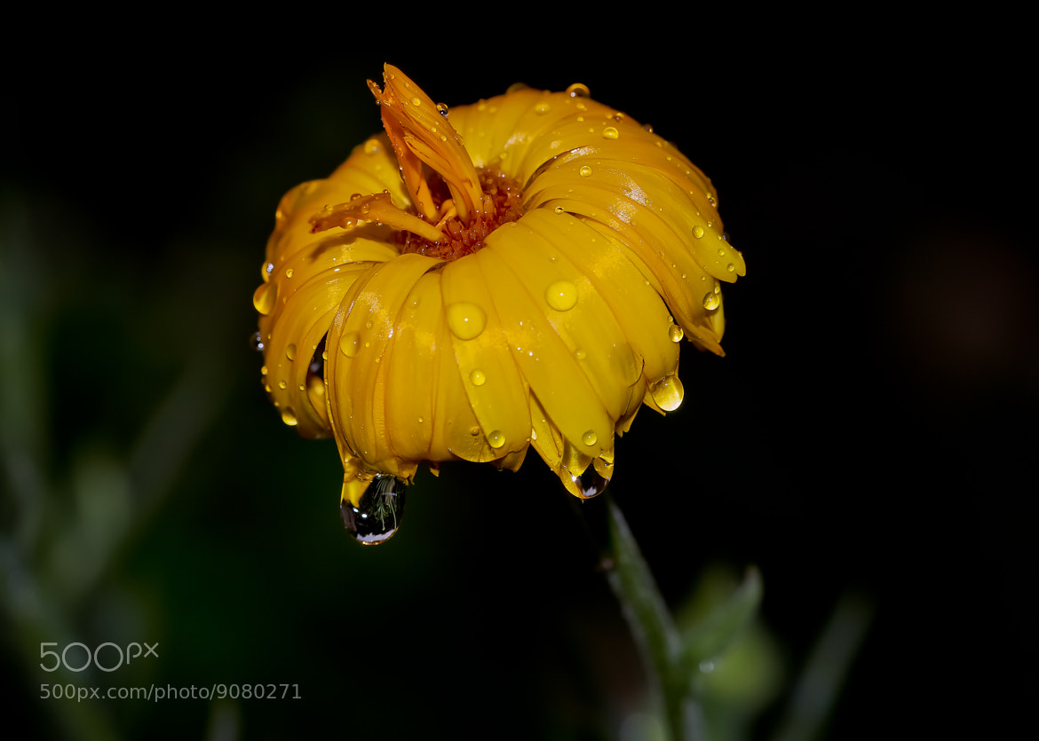Photograph Wet by Jean-Louis B. on 500px