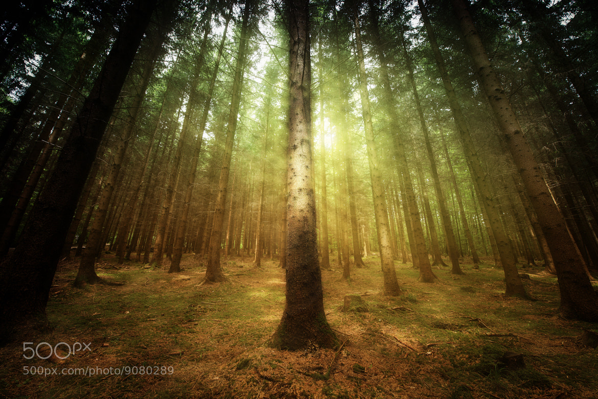 Photograph Emerald Forrest by John Wilhelm on 500px