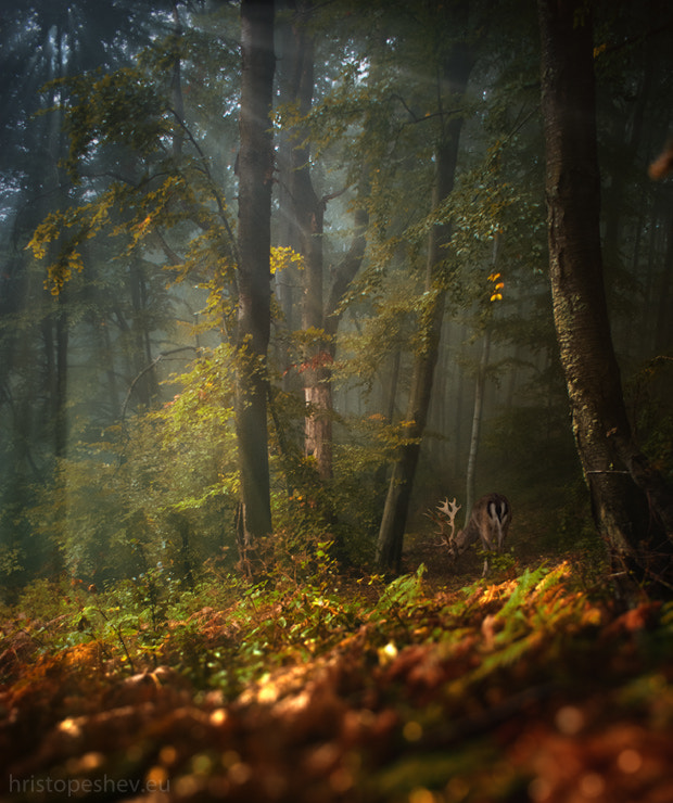 Photograph forest by Hristo Peshev on 500px