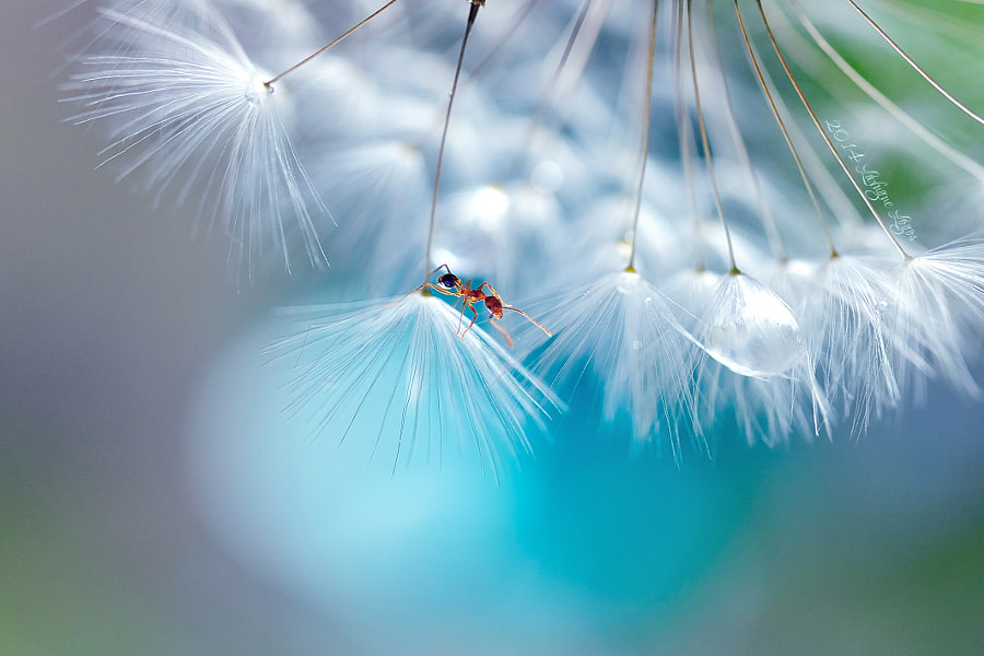 Unexpected occurrences by Lafugue Logos on 500px.com