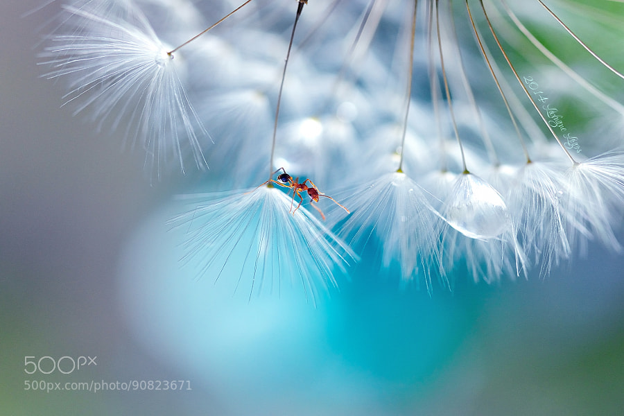 Photograph Unexpected occurrences by Lafugue Logos   on 500px