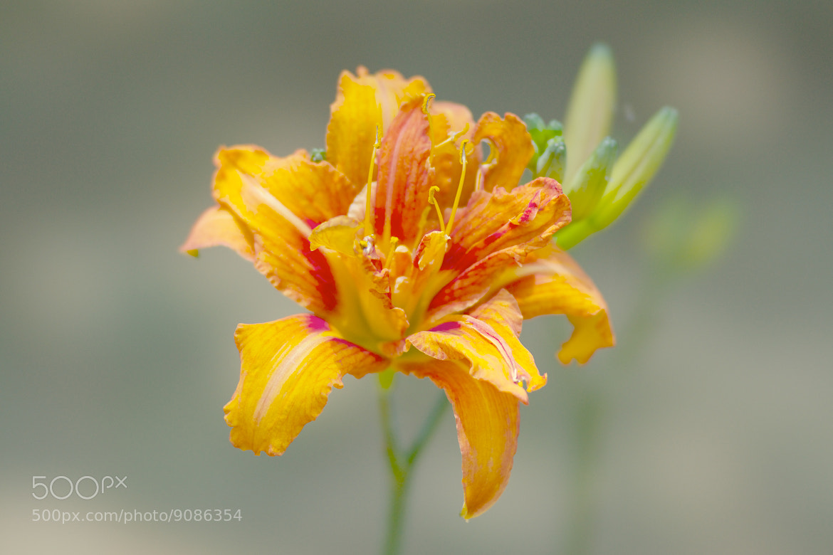 Photograph Orange Color Flower by marbee .info on 500px