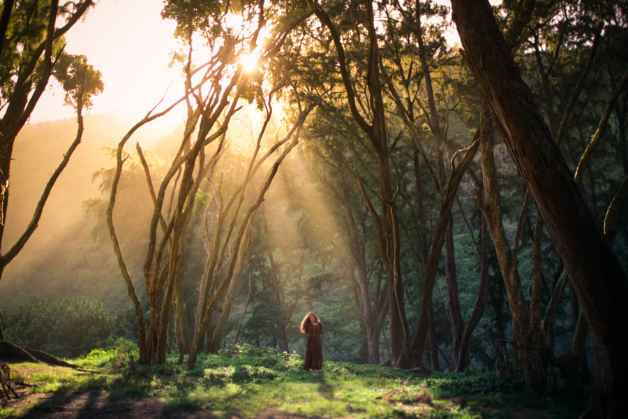 Photograph The Golden Hour by Lizzy Gadd on 500px