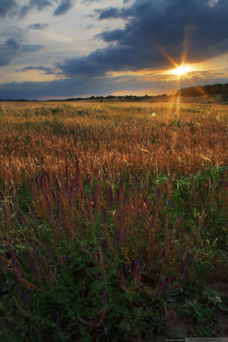 Photograph Meadow flowers by Anton Averin on 500px