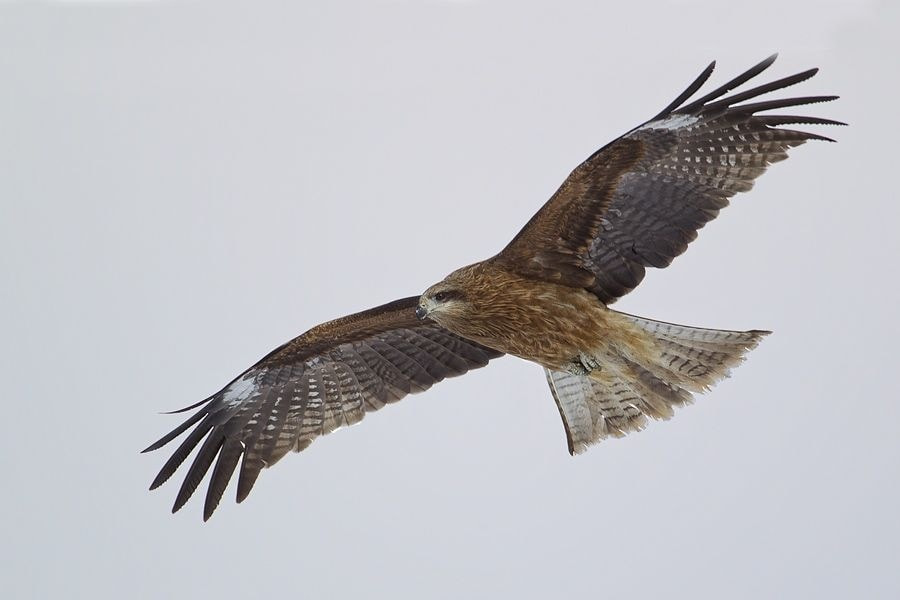 Photograph Kite by Peter Edge on 500px