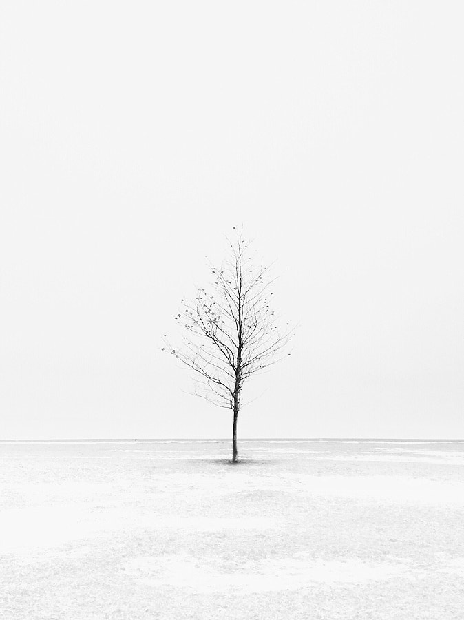 Photograph Solo tree by Cocu Liu on 500px