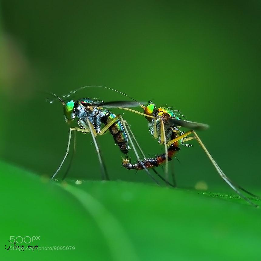 Photograph loving U  by bug eye :) on 500px
