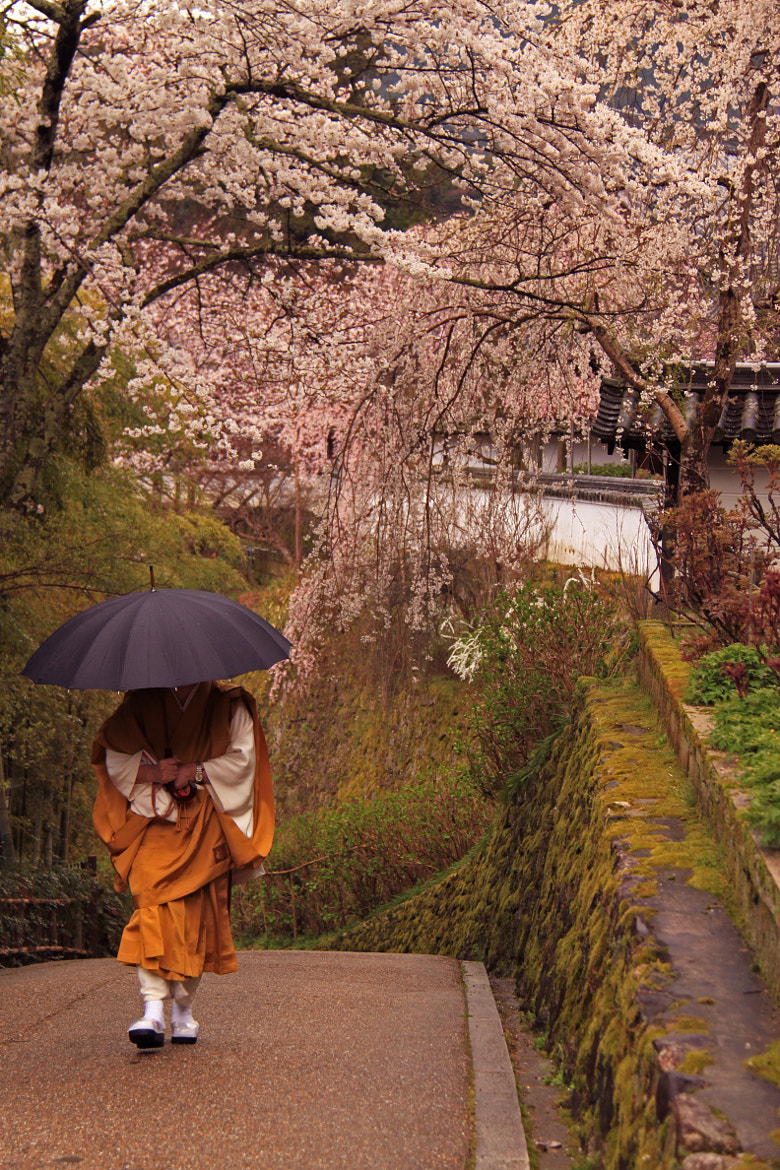 Photograph Spirit of Japan by Jacky CW on 500px