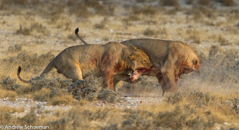 Photograph Food fight! by Andrew Schoeman on 500px