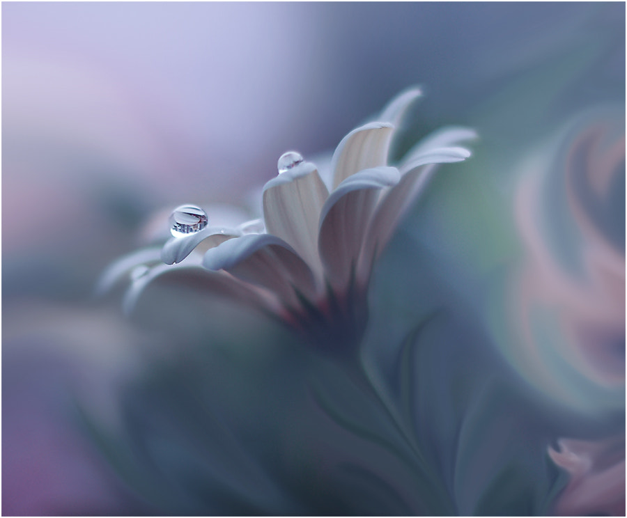 Photograph //O// by Juliana Nan on 500px
