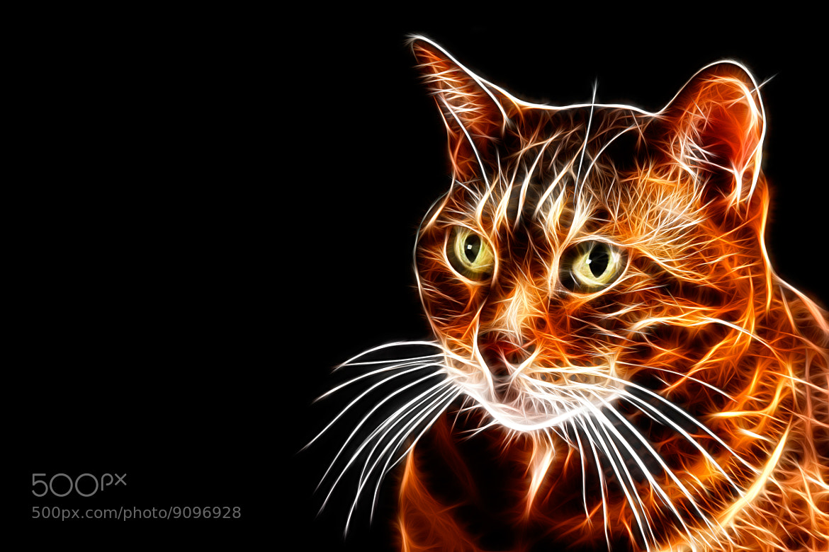 Photograph Have you seen this cat? by Vendenis . on 500px
