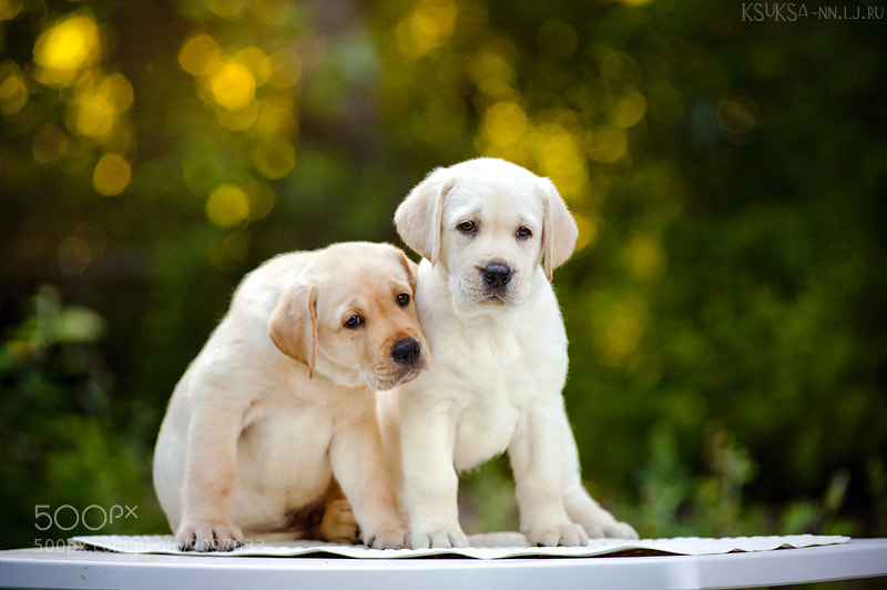 Photograph Puppies by Ksenia Raykova on 500px